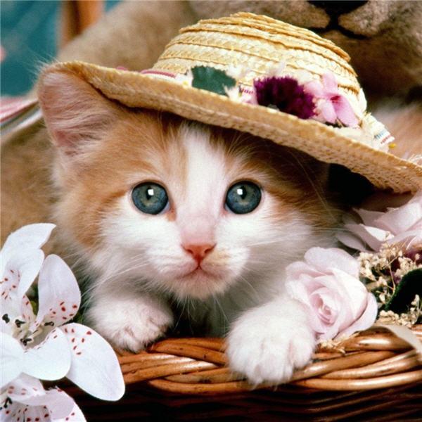 Cute Kittens Wearing Hats a Cute Kitten Wearing a Hat