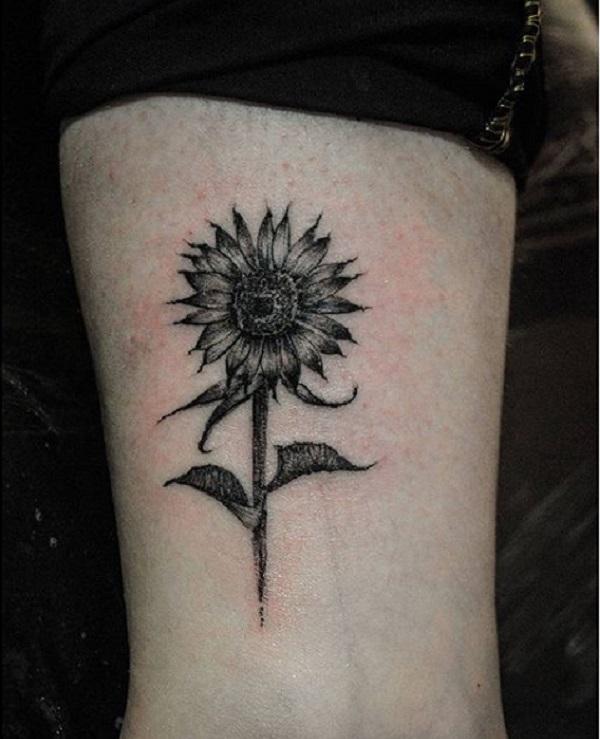 Sunflower25